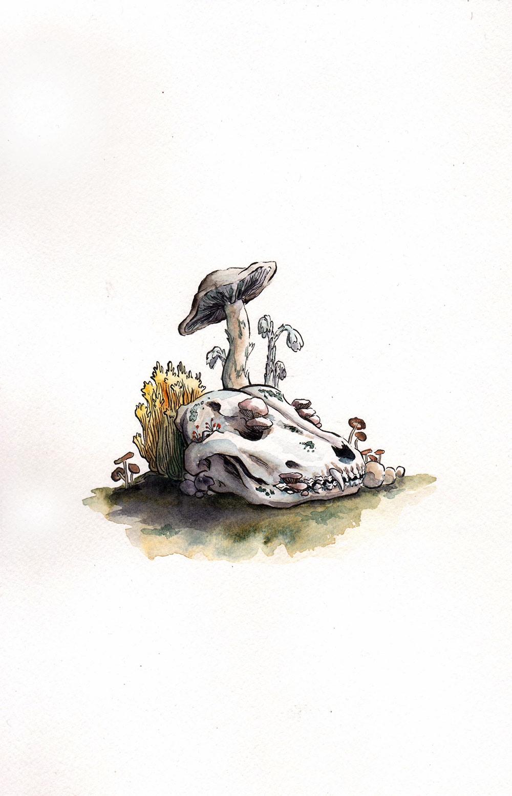canine skull consumed by various fungi, each sprouting around, on, or through the holes of the skull